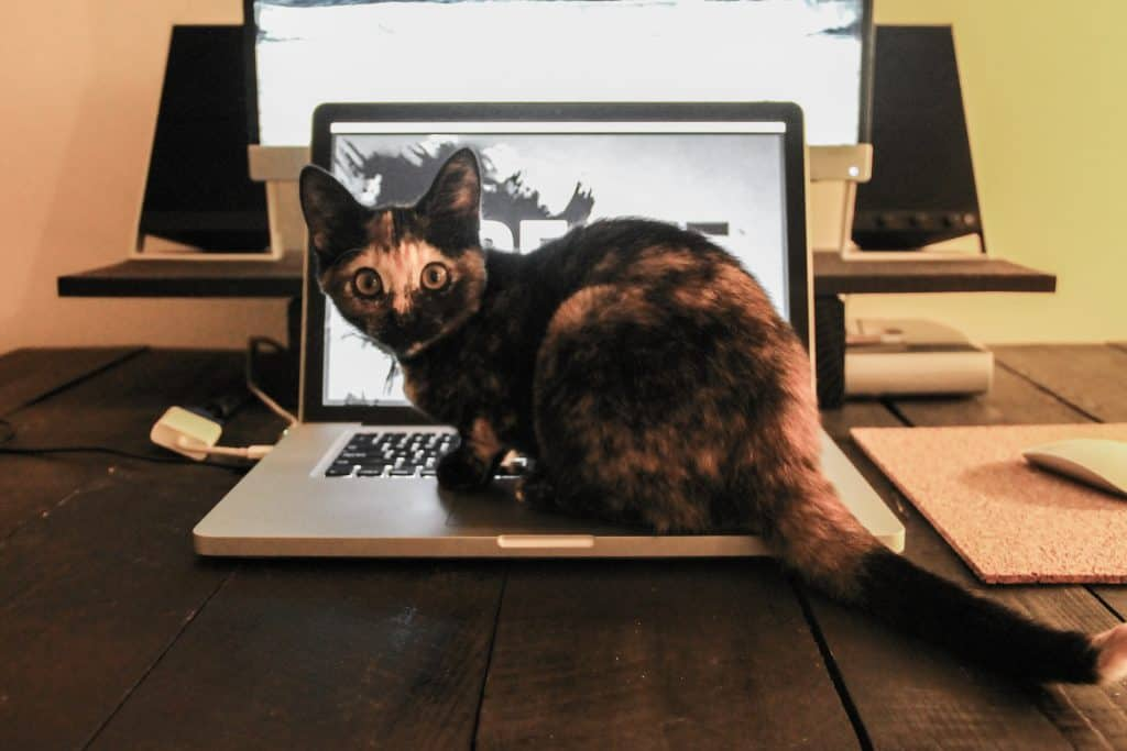 cat-sitting-laptop