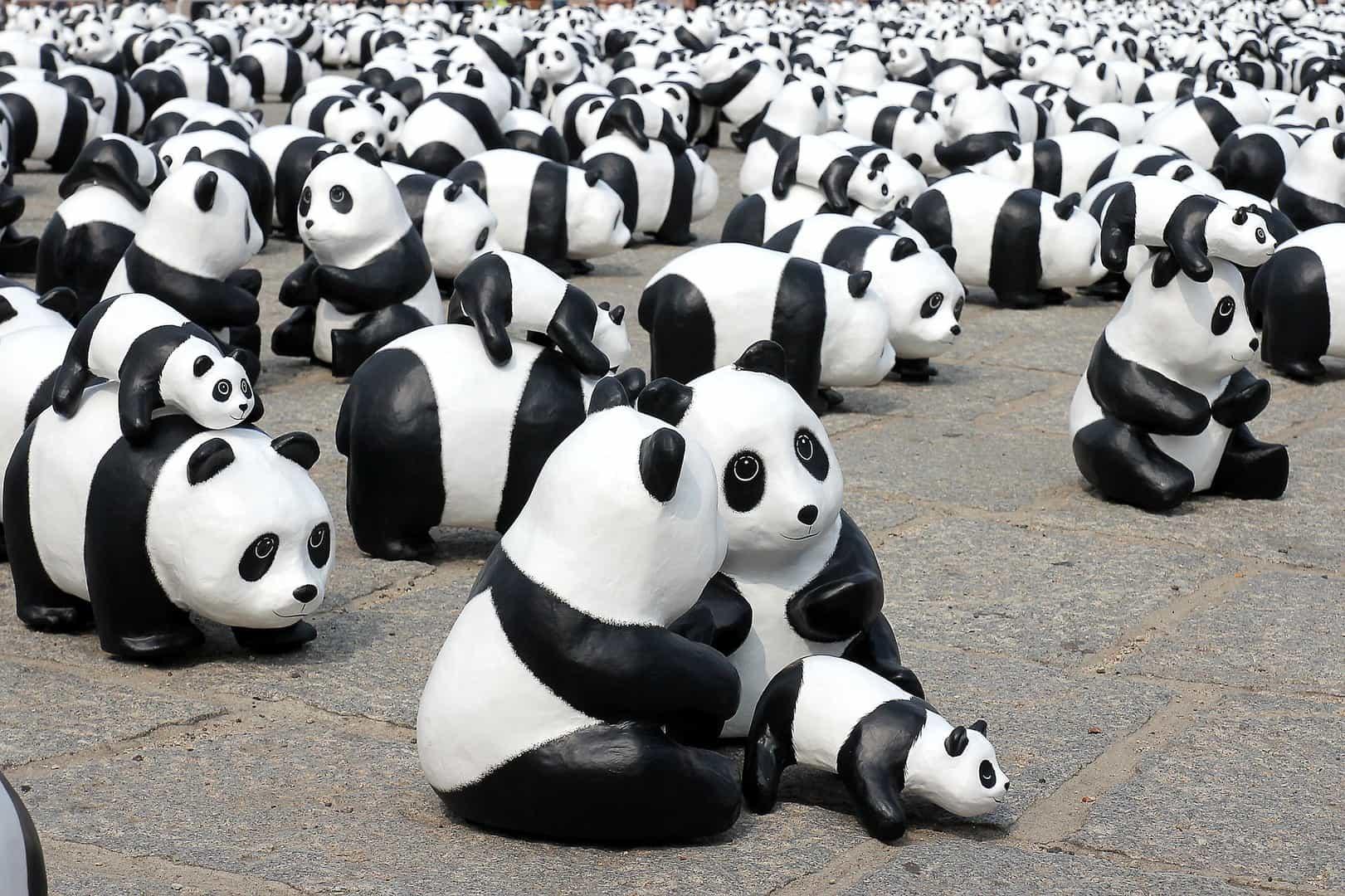 panda-826241_1920